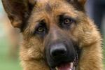 В Днепропетровске собак травят крысиным ядом и медпрепаратами