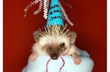 картинки с днем рождения с ежиком