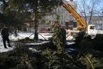 Во Львове устанавливают главную сломанную елку