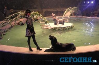 igri-pro-tsirkovih-morskih-kotikov
