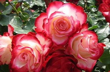 Цветы в крыму 22