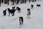 В Киеве жестоко душат и травят собак