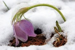 Весна грозит психическими расстройствами – врачи