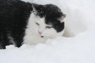Завтра в киеве снова снег фото