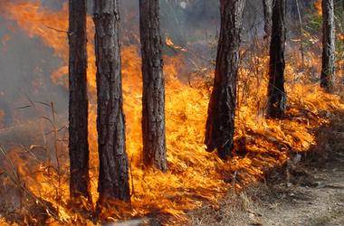 <p><span>В Харьковской области начался сезон пожаров. Фото:</span>ktelegraf.ru</p>