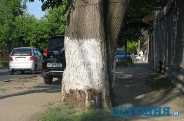 Уничтожения деревьев фото а жуков