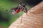 Жителей Западной Украины атакуют полчища комаров