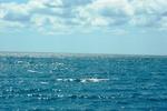 На Азовском море туристы выловили мертвого мужчину
