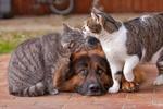 В Днепропетровске массово травят котов и собак, у детей – истерики