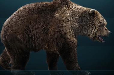Как выглядит член медведя