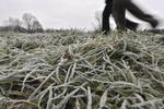 Дожди, холода и туманы накроют Украину