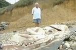 На испанский пляж выбросило огромного девятиметрового кальмара