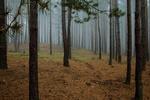 """К акции """"Сделаем лес чистым!"""" присоединились 5 тысяч киевлян - КГГА"""