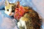 Найди друга. Очаровашка Шарлотта - дружелюбный котенок