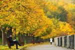 В начале недели в Украине сохранится осеннее тепло и солнце