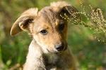 Найди друга. Три ушастых щенка нуждаются в заботе и любви