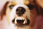 Британских ученых озадачил вопрос, что появилось раньше – зубы или челюсти