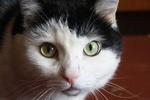 В Японии выпустили кошачье вино