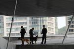 В Чили бездомные собаки  будут бороться с преступностью
