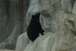 Как вырос медвежонок в Киевском зоопарке