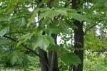 В украинских городах высадят деревья, чтобы стало легче дышать