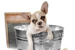 Как правильно выводить глисты у собак и котов