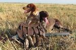 Харьковским охотникам придется привыкать к новым правилам отстрела зверья