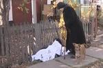 В Донецкой области тело полковника полдня пролежало под забором: люди проходили мимо