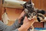 Жительница Черновцов держит в квартире 31 кота