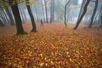 Конец октября порадует солнечными днями
