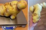 """Шведы рассмотрели в изгибах гигантской картофелины сцену из """"Титаника"""""""