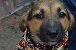 Собачка без имени мечтает о теплом доме и миске супа