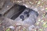 Как киевляне спасают котят от смерти
