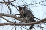Во Львове спасли кота, который три дня кричал на верхушке дерева
