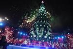 В Киеве начинают установку новогодней елки