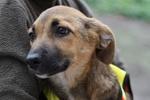 Собачке Буле нужен теплый дом, где ее будут любить и кормить
