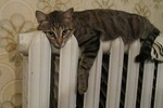 В киевских квартирах станет теплее