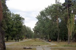 В Киеве ищут людей, отравивших в парке 80-летние сосны