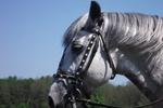 В Никополе лошадь для прогулок покалечила ребенка в парке