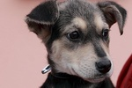В Киеве на остановке нашли щенка в коробке - малышу нужен дом