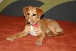 Найди друга. Рыжая Салли - ласковая и дружелюбная собачка