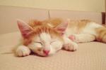 В Одессе ищут дом котята Кася и Пеппи