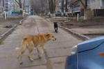 В Одесской области на ребенка напала стая бродячих собак
