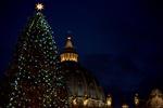В Ватикане зажгли рождественскую елку