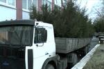 В Киеве задержали партию контрабандных елок