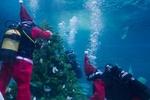 В Донецке приглашают на елку под водой