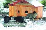Из киевского зоопарка хотят выгнать котов