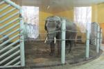 Голубченко предложил директору Киевского зоопарка уволиться
