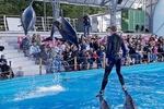 """В Одесском дельфинарии прокомментировали скандал с """"Машей и Медведем"""""""
