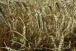 Эксперты рассказали, что принесут аграрной сфере новые налоговые правила